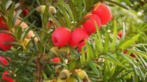 Maçka Parkı'ndaki Ağaçtan Meyve Yedi Öldü!
