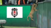 Beşiktaş Tekir'i Arıyor!
